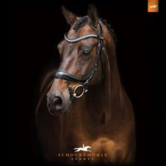 Casque Harry's Horse Centaur VG1