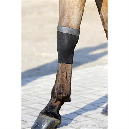 Halter and Lead Rope QHP Friesian