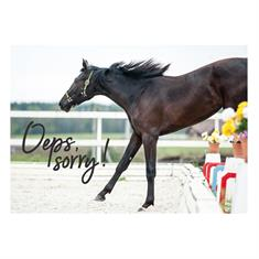 Safety Helmet Harry's Horse Chinook Crystal VG1