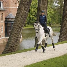 Showdeken QHP Friesian