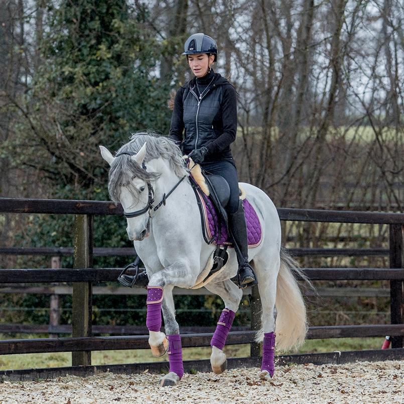 Showshirt Harry's Horse Lace